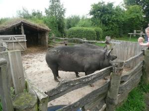 Pig, Gyrwe