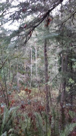 TreesMove